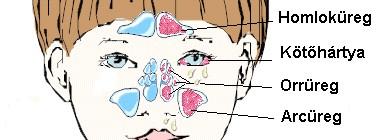 allergia tünetei